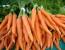 La carota: proprietà e usi terapeutici