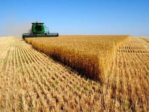 Cereali e grano.