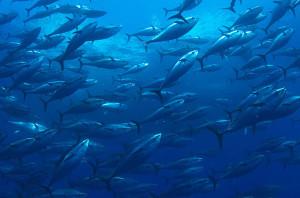 La pesca nel Mediterraneo.